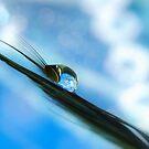 butterfly blå by Christine Dyrnes