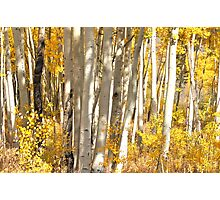 Aspen Photographic Print
