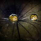 Cobweb by Christine Dyrnes
