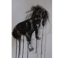 Cocker Spaniel, Black Ink and Conte Drawing Photographic Print