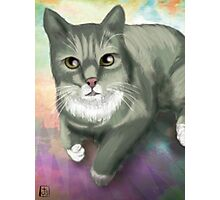 Potter the Cat Photographic Print
