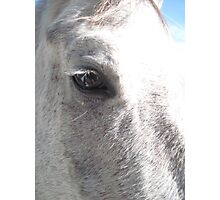 Soul of A Horse Photographic Print