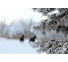 Dashing Through the Snow Photographic Print