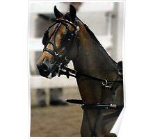 Arabian Horse In Harness Poster