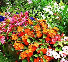 Impatiens and begonias by lezvee