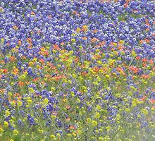 Wild Mustard with Bluebonnets and  Indian Paintbrush by Navigator