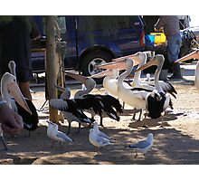 'HURRY UP GUYS WE'RE STARVING!' Pelicans at Venus Bay! Photographic Print