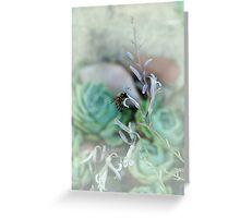 Bee on Haworthia flower Greeting Card