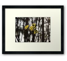 Green Spring - First Leaves in the Forest Framed Print