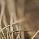 Casuarina Needles Abstract by CollinScott