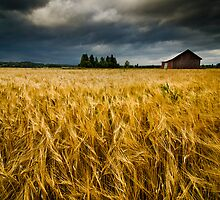 Field of Darkness by Mikko Lagerstedt