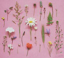 Wild Flowers by Cassia