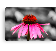 Purple Coneflower - SC Canvas Print