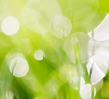 Green Abstract - Dewdrops in the Sunlit Grass 2 by Natalie Kinnear