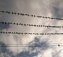 Birds on a Wire by melodywatson