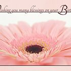 Birthday Blessings - Pink Gerbera Daisy Card by Tracy Friesen