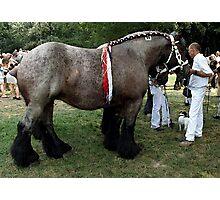 Ardennais Draft Horse Portrait Photographic Print