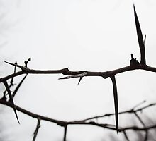 A Crown of Thorns by Jeffery Loving