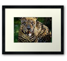 44 in your face Framed Print