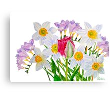 Narcissus and pink tulip Canvas Print