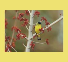Lesser Goldfinch In Early Spring Kids Clothes
