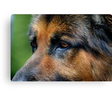 German Shepard Canvas Print