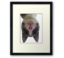 Crazy Gracie Upside Down Kitty Framed Print