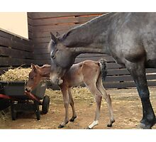 Janey & Baby Photographic Print