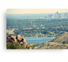 A View for the Birds Canvas Print