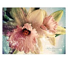Spring has sprung Photographic Print