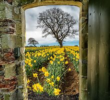 Outside The Gate by Adrian Evans