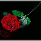 Red Rose by amira