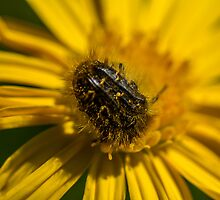 HAIRY INSECTS 1 by PhotoShopping