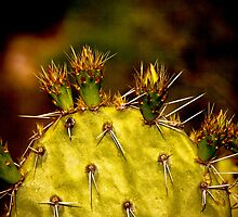 Prickly Pear Spring by Roger Passman