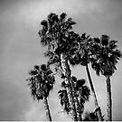 Palm Trees, Los Angeles by Douglas E.  Welch