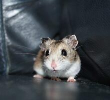 Diglett The Hamster 2 by EmilyWednesday