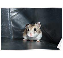 Diglett The Hamster 2 Poster