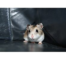 Diglett The Hamster 2 Photographic Print