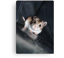 Diglett The Hamster 3 Canvas Print
