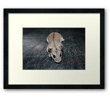 Diglett The Hamster 4 Framed Print