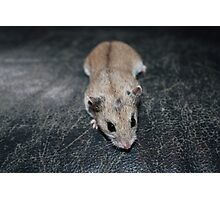 Diglett The Hamster 4 Photographic Print