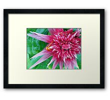 Raspberry Spike Framed Print