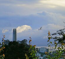 Coit Tower After the Storm by David Denny