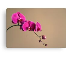 Magenta Orchids Canvas Print