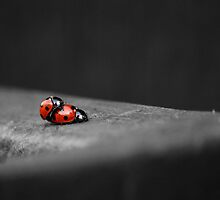 Lady Bird Loving by liberthine01