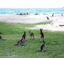 Roos On A Beach by Asoka