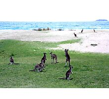Roos On A Beach Photographic Print