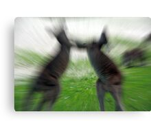 Fighting Roos Canvas Print