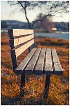 Bench by marko-stosic