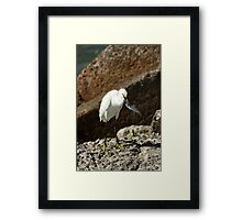 SNOWY EGRET WITH FISH Framed Print